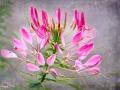 Dacha Flower