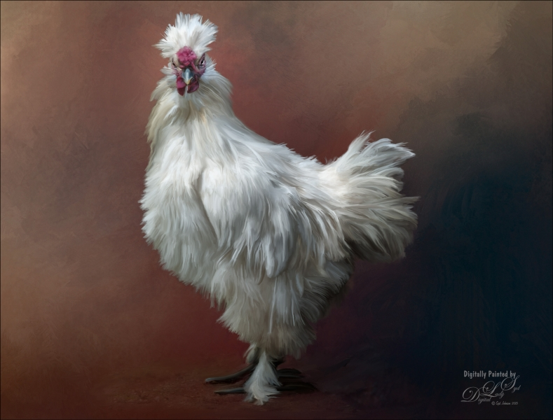 Fluffy Rooster